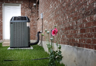 A flower next to an air conditioner.