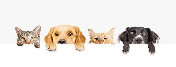 Pets & Pests vs Air Conditioners: How Animals Damage HVAC Systems